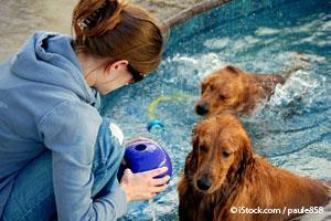 Actividades Para Perros