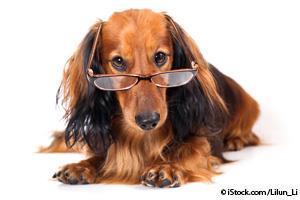 Ceguera en las Mascotas