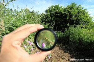 Evolución de los Insectos