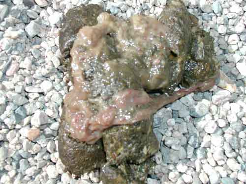 Gross But Important When Your Dog S Poop Looks Like This