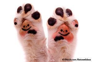 Resultado de imagen para patas de mascotas