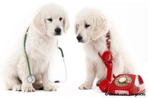 Perros Enfermos
