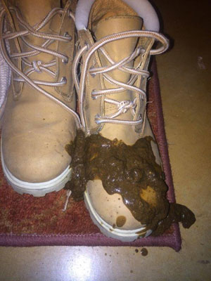 Gross But Important When Your Dog S Poop Looks Like This Visit Your Vet