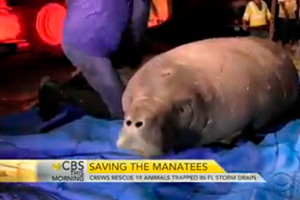 "19 Endangered ""Gentle Giants"" Rescued from Florida Storm Drain"