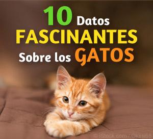 datos fascinantes sobre los gatos