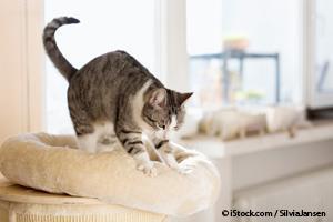 Gato Masajeando