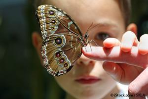 Mariposas con Ojos Falsos