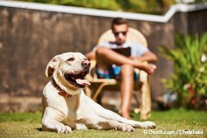 Perro con Sobrecalentamiento