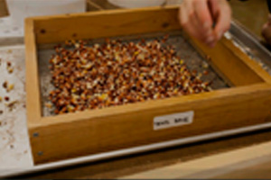 'Seeds of Change' Documents the Seed Saving Movement