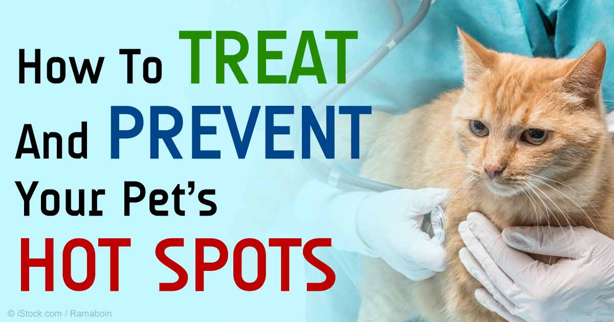 Hot Spot: Super Fast-Growing Kitty Infection