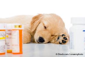 Mascota Envenenada