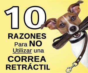 correa retractil para perros