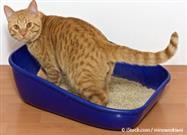 Cat Litter Box Mistakes That Owners Unknowingly Make