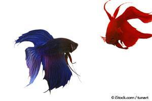 10 Cool Facts About These Colorful Betta Fish