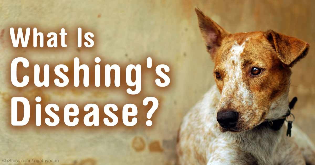 dog cushings disease life expectancy