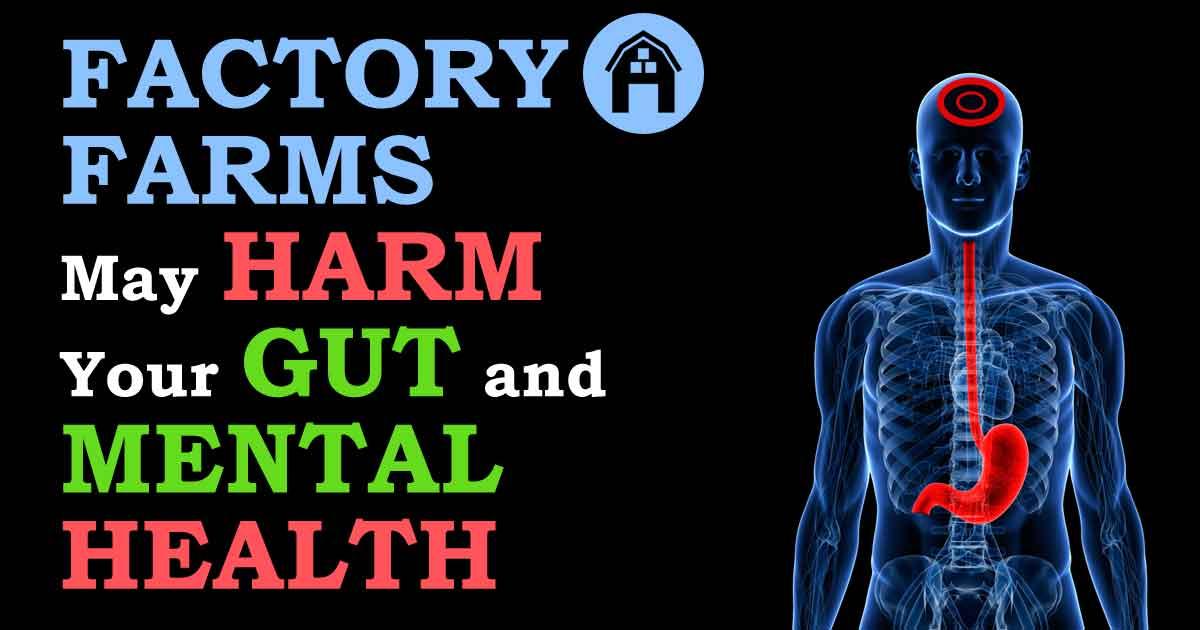 Avoid Gut & Mental Health Problems, Eat Antibiotic-Free Chicken