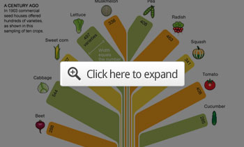 Food Variety Infographic