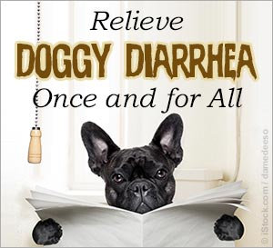 Dealing with Dog Diarrhea