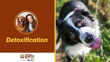How to Reduce Your Pet's Toxic Load, and Why It's So Important