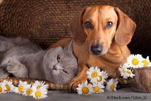 Desintoxicar Mascotas