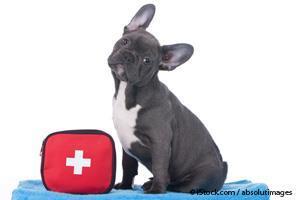 Equipo de Emergencia Para Mascotas