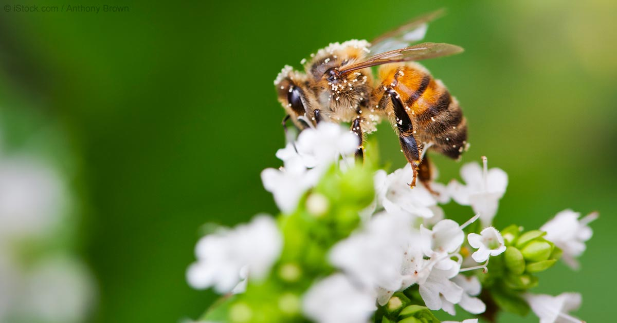 Neonicotinoid Insecticides Cause Brain Impairment in Bees