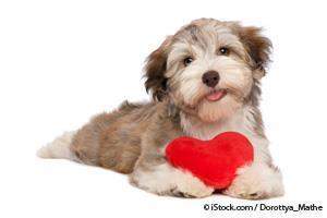 Problema de Corazón en los Perros