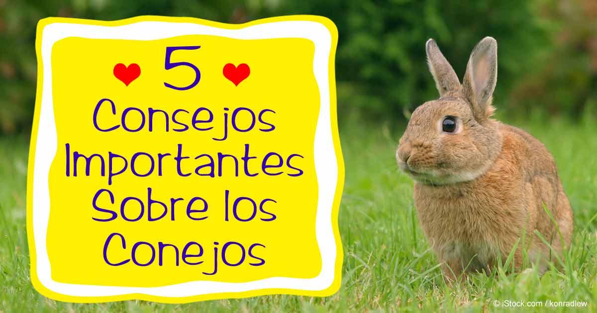 Cuidado de los conejos 5 consejos importantes - Casas para conejos enanos ...