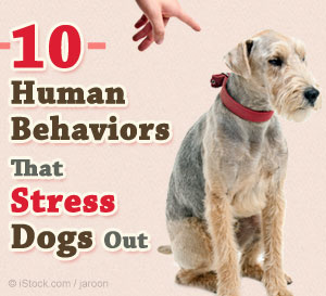 stress triggers for dogs