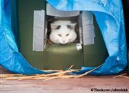 winter cat shelter