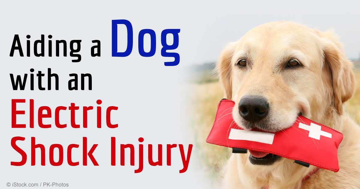 dog-electric-shock-injury-fb.jpg