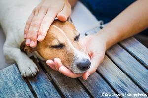 Estado de Salud Canina