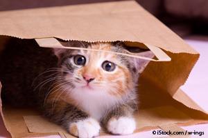 Gato Tímido