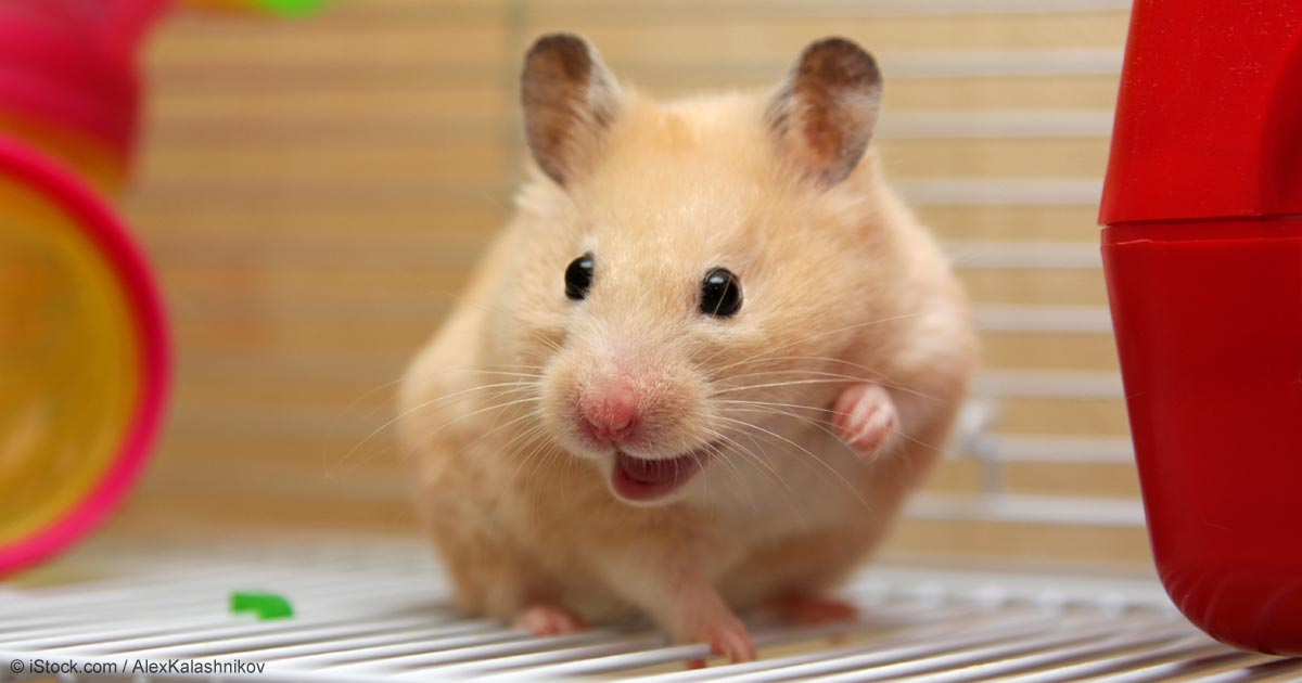 How to Make Your Hamster Happier