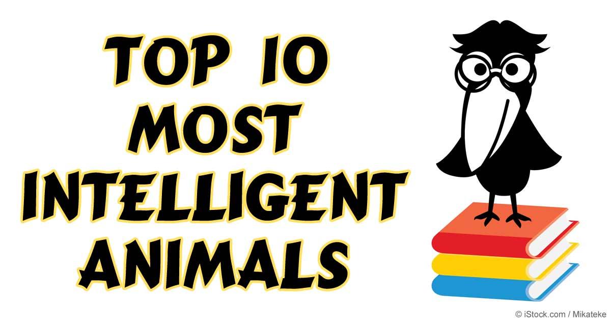 Top Most Intelligent Animals - 25 intelligent animals world