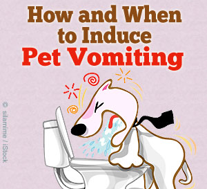 when to induce vomiting in pets