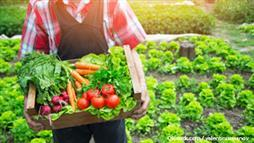 opt for organic foods
