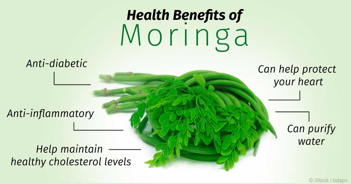 Kết quả hình ảnh cho moringa tree