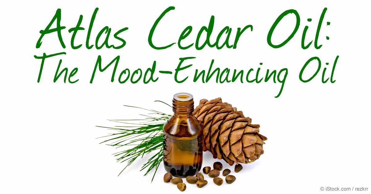 Herbal Oil: Atlas Cedar Oil Benefits and Uses
