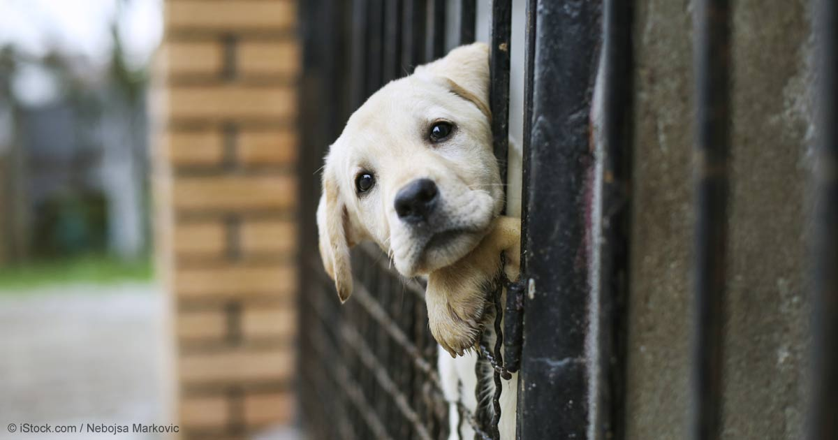 10 Life Changing Reasons To Adopt A Shelter Dog