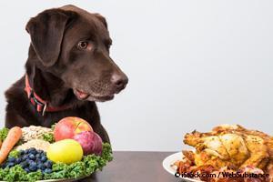 El 'Error' Alimenticio Que Considero Poco Ético...