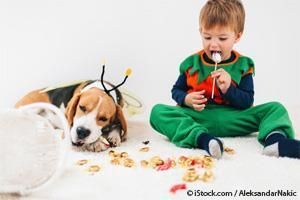 Perro Comiendo Dulces