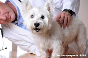 Pet Wellness Checkup