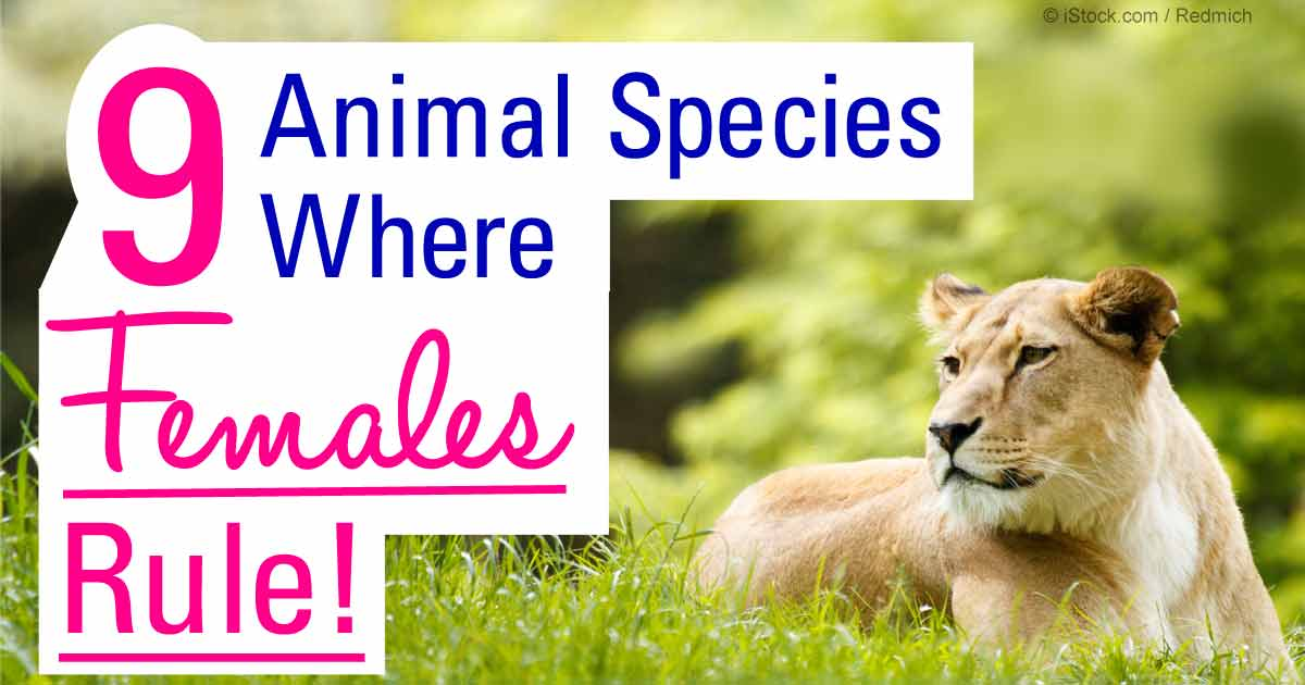9 Matriarchal Animal Societies