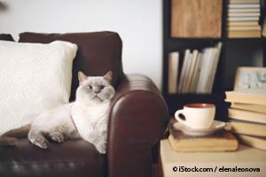 Gato Domesticado