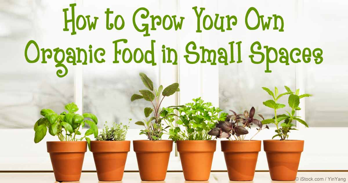 Beautiful Grow Organic Food Small Spaces Fb