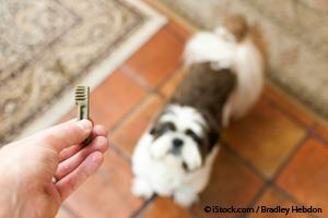 Pet Care Myths