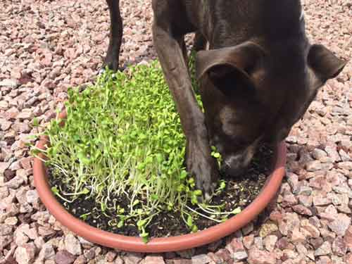 Violet Eats Sprouts