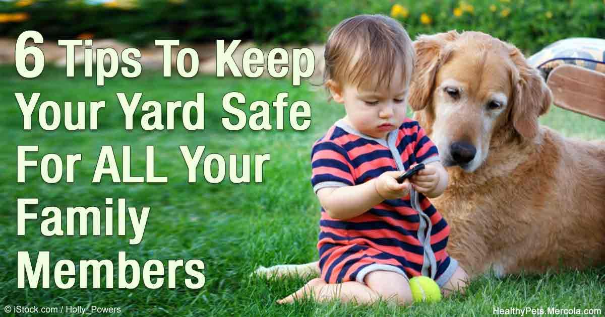 safe yards and lawns for your playful pets. Black Bedroom Furniture Sets. Home Design Ideas