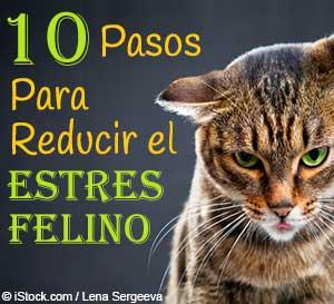 factores de estres felino